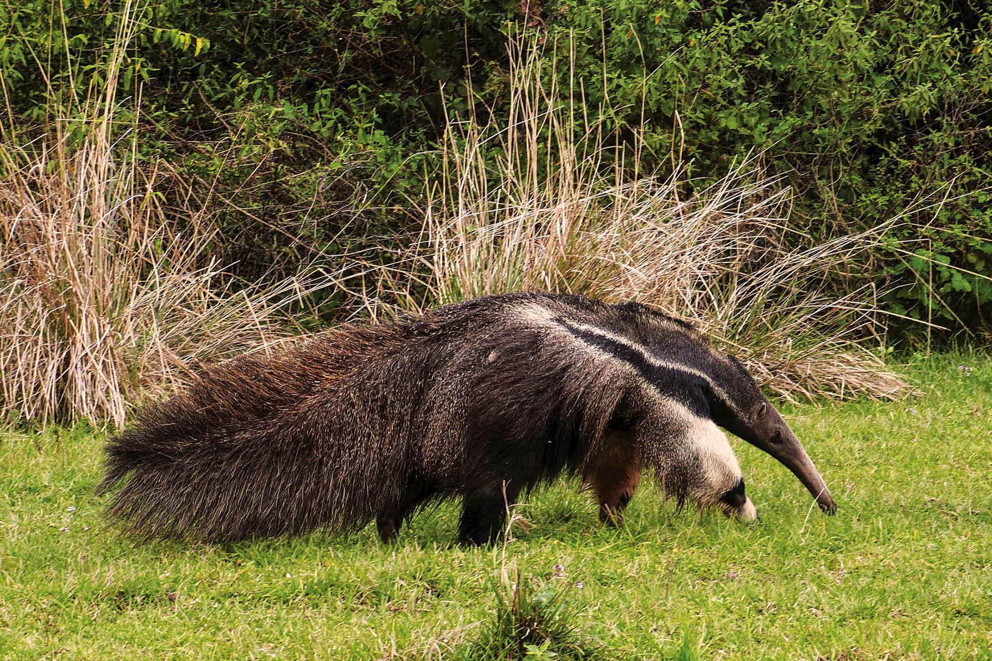 Parque Nacional Iberá